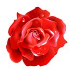 红玫瑰直播去广告破解版 v5.2.118.1025