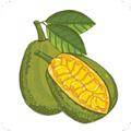 菠萝蜜视频无限看